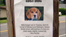 Communities Using Tech to Help Find Missing Pets