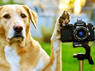 Have a Photogenic Pet? Here Are Some Photo Tips!