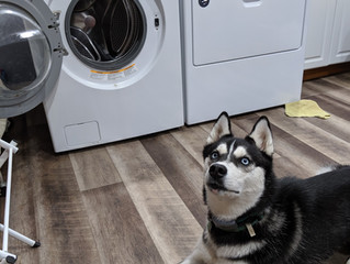 Pets and Dryer Sheets