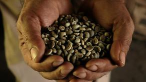 El Café y su producción en Amatepec