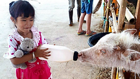 Girl feeding calf_cropped.png