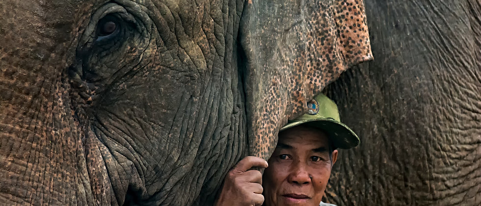 MandaLao Elephant Conservation – Promoting ethical treatment of elephants