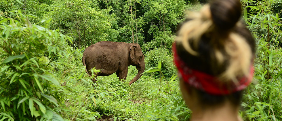 Elephant Valley Project – Improving the health and welfare of captive elephants