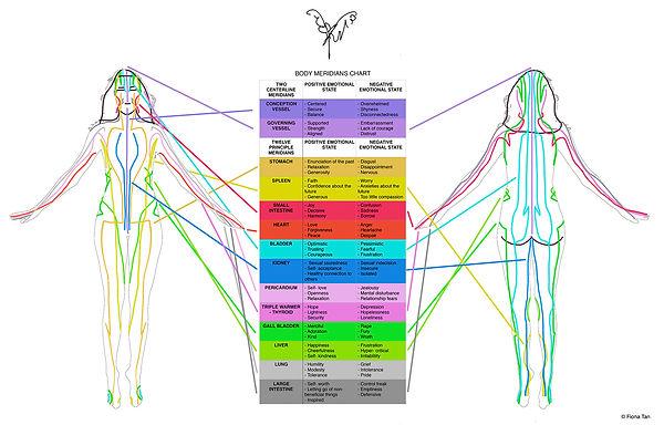 meridians, chi, energ flow, organs, energy system, artceuticals