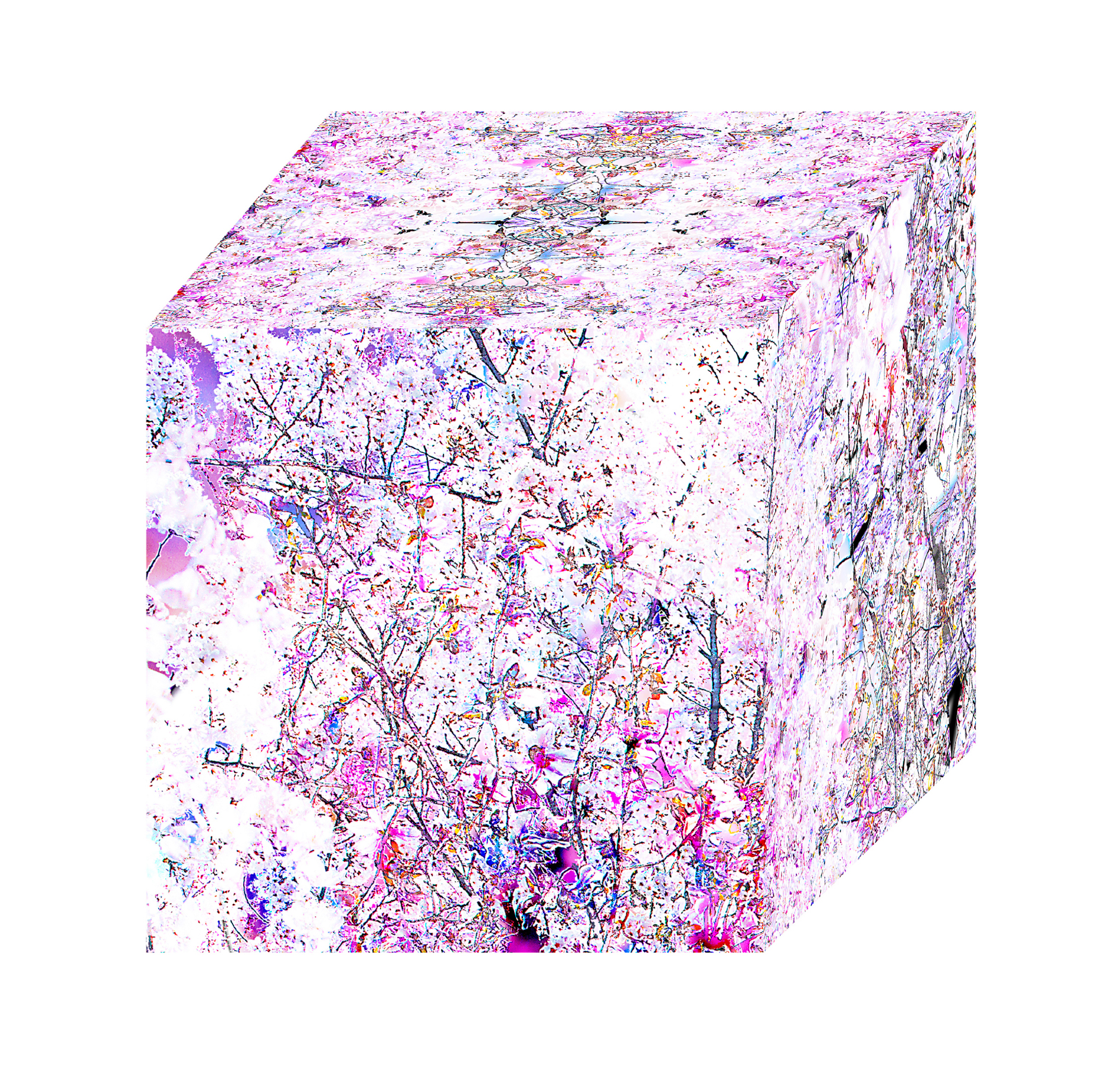 Diamond Cube: Sakura 5_42