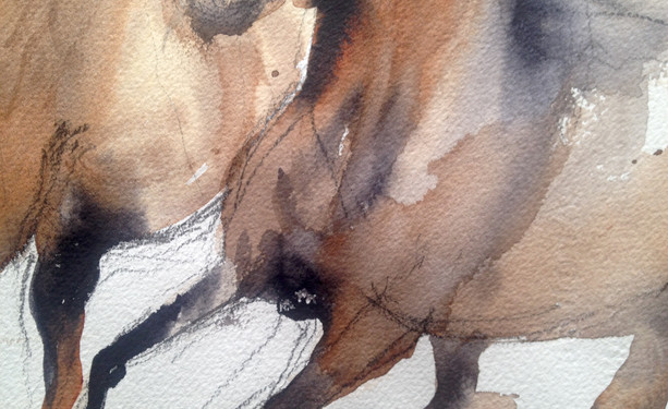 equestrian in motion study