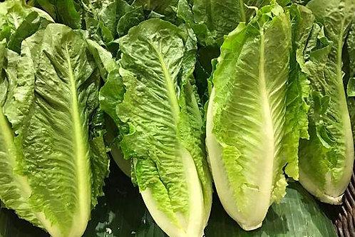 Romaine Lettuce Hearts (3 Pack)