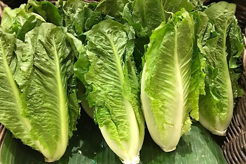 Full Romaine Lettuce