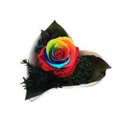 Carmen rainbow