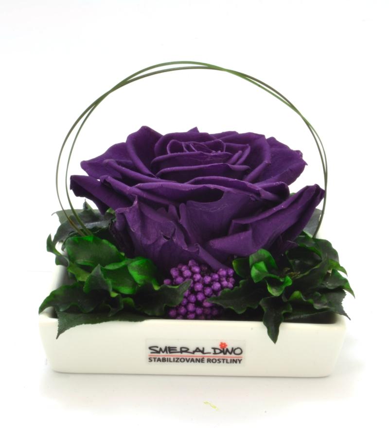 Diana purple