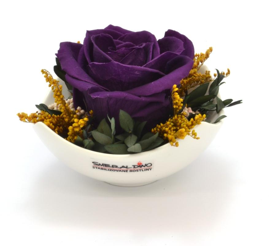 Elaine purple