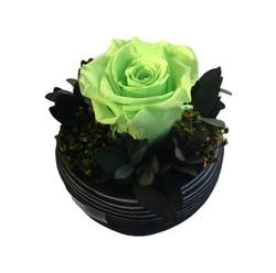 Charlotte - lime green