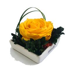 Diana yellow