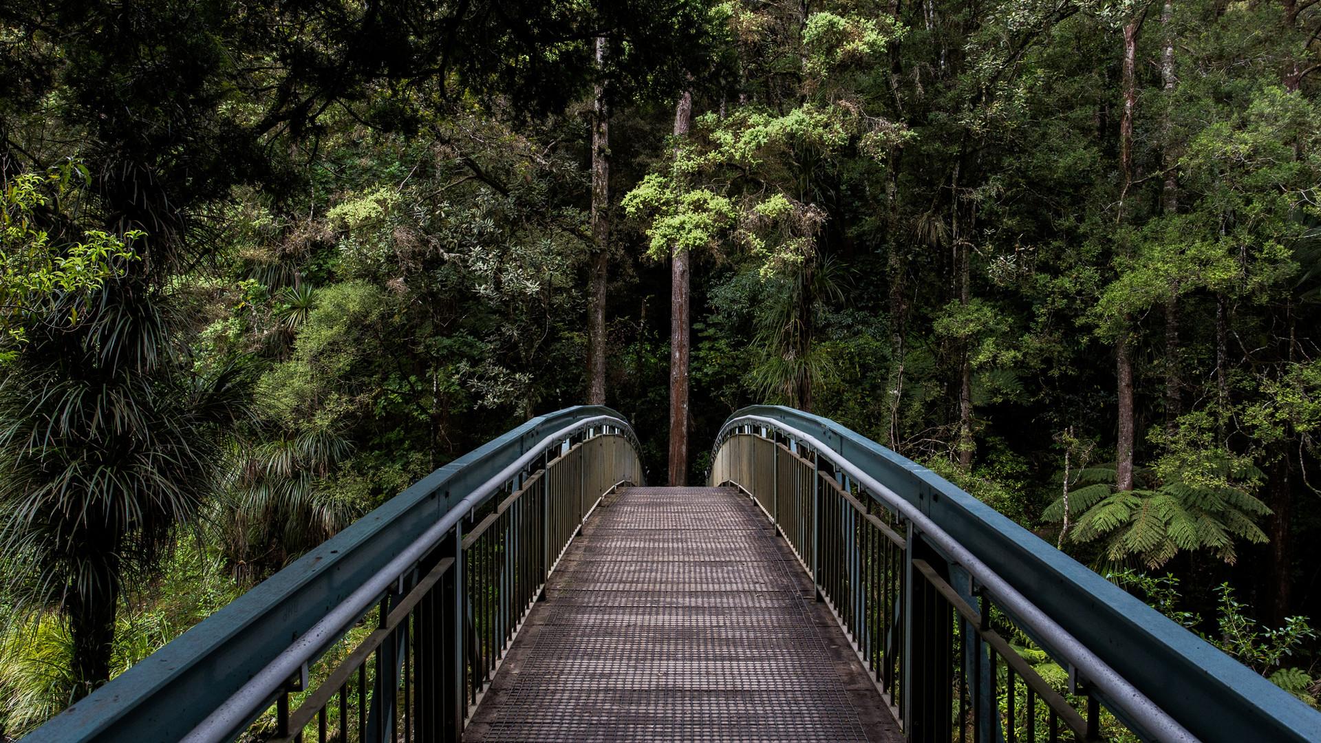 Bridge to Addiction