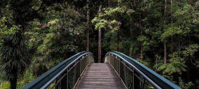 Most w lesie