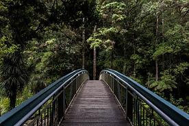 Bridge ind i skoven