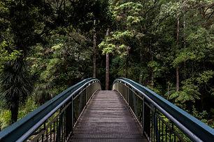 Brücke in den Wald