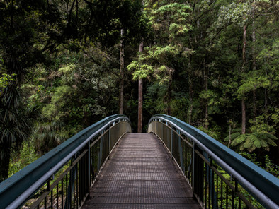 Health Benefits of Nature Therapy And A Walk In The Woods