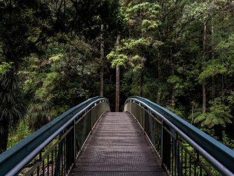Choosing My Path