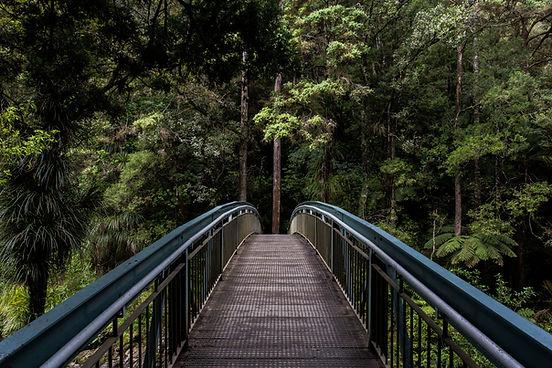 Miljö i skogen