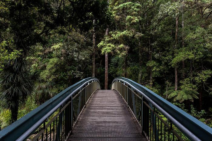 Bridge in i skogen