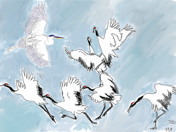 Quirky with the red crowned cranes