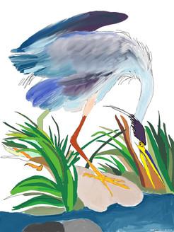 Audubon Style Sketch