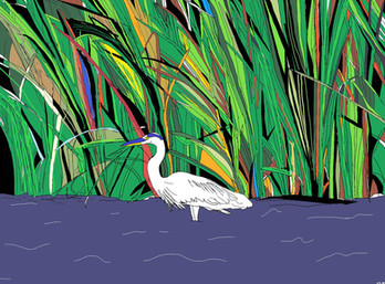 Quirky in Colorful Reeds
