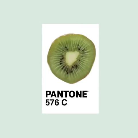pantone_20075713_242290476289431_4019773