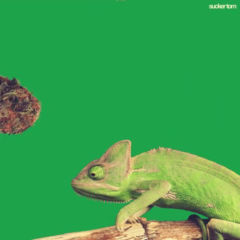 Cannabis_003 (_suckertom).mp4