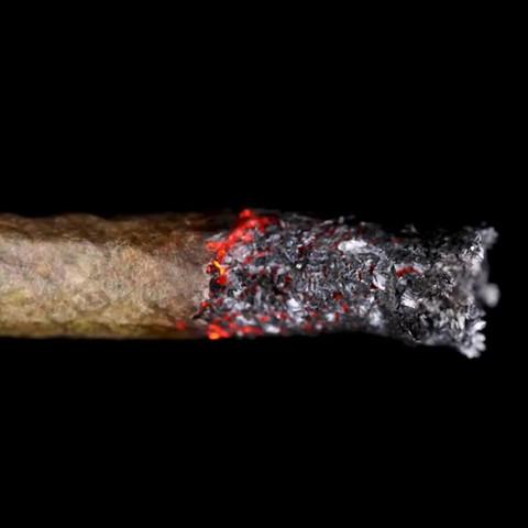 Cannabis_026 (_bentleyrolling).mp4