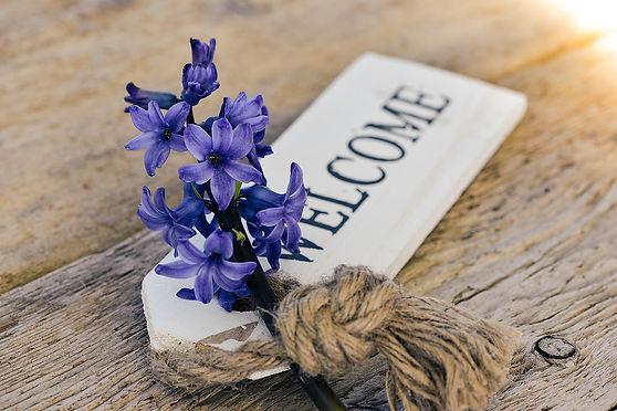 hyacinth-773379_1920.jpg