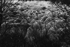 iceland6_0003.jpg