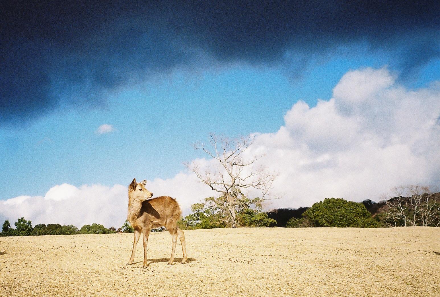 Nara, Japan, 35 mm kodak