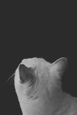13_BlankSpace_Luna