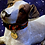 Thumbnail: Pet jewelry | by Two Tails pet company