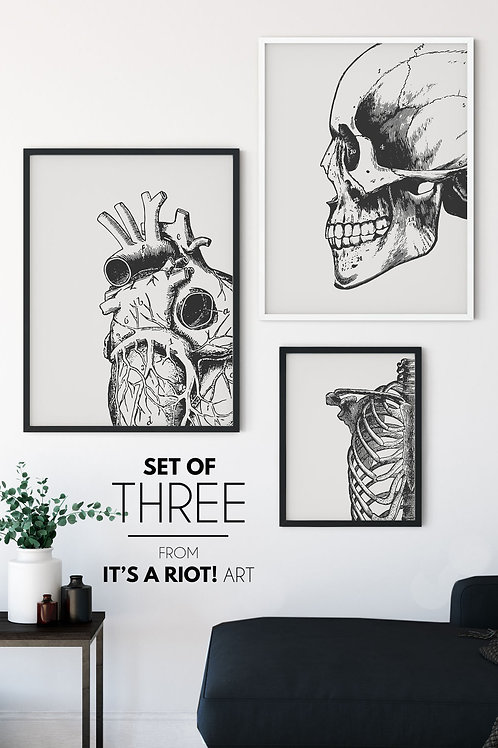 Anatomical Wall Art, Printable Digital Download, Skull Decor, Goth Wall Art, Gothic Home Decor, Macabre Art, Unique Halloween