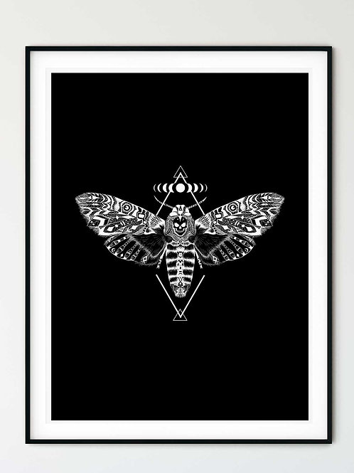 Death's Head Moth Wall Art