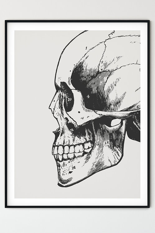 Anatomical Skull Wall Art