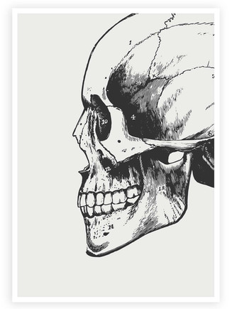 Anatomical Skull • Wall Art