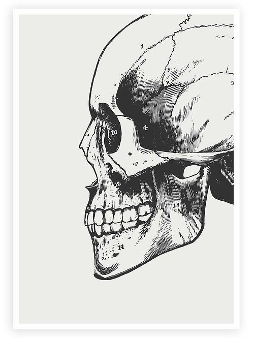 Large print Anatomical Skull. Minimalist PRINTABLE WALL ART in Goth,Grunge, Punk aesthetic for your Gothic home.