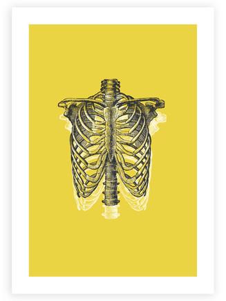 Anatomical Ribcage • Wall Art