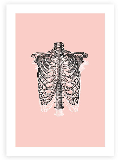 Anatomical Ribcage PRINTABLE WALL ART. Pastel Gothaesthetic with an edge.