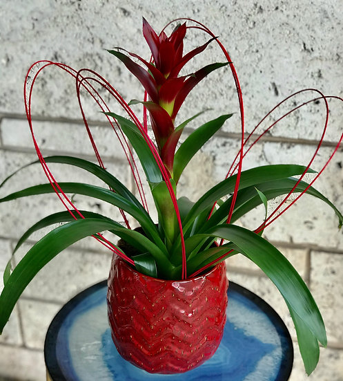 Ruby Red Bromeliad