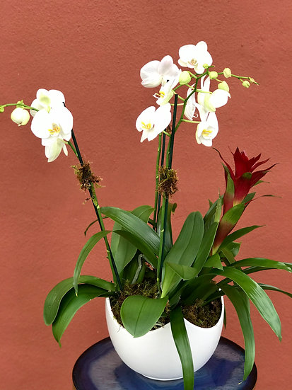 Classic Orchid Garden
