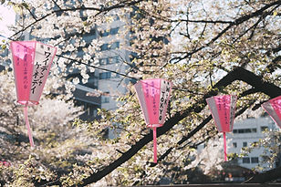 Canva - Cherry Blossoms and Hanging Lant