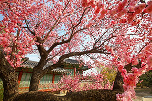 1810014201304002k_Changdeokgung Palace.j