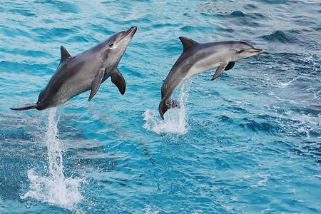 Stock Dolphin 4.jpeg