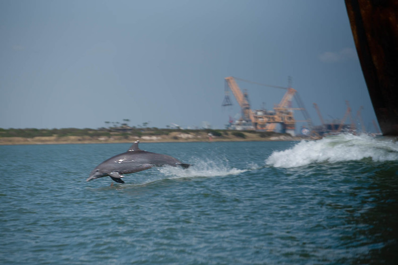 10.13.20_Dolphin Connection (5 of 5).jpg
