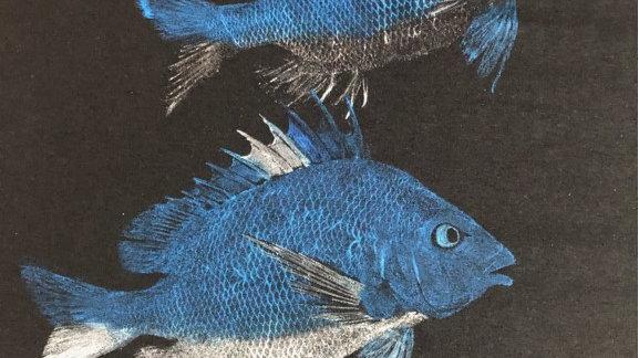 Fish Fellowship T-Shirt